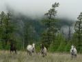 Любопытные коняшки
