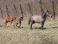 Нормальные лошади