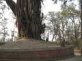 nepal17 14