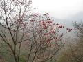 nepal17 30